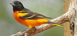 Birding Around the Walloon Lake Area