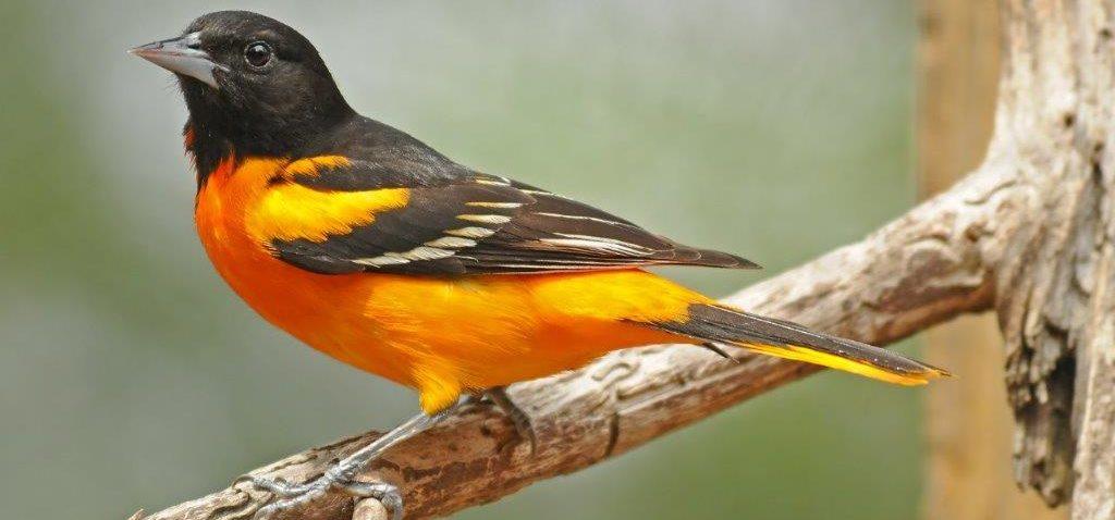 Birding Around the Walloon Lake Area