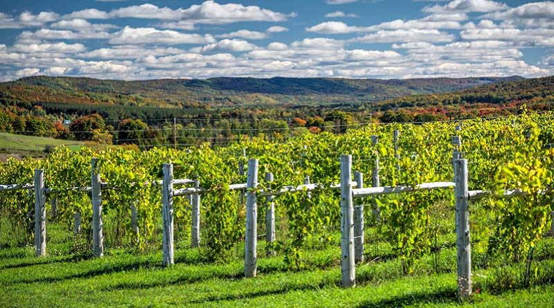 You are currently viewing Celebrate Michigan Wine Month Near Walloon Lake
